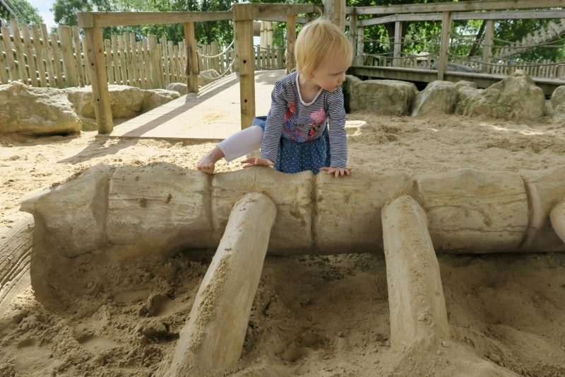 A 2 year old girl climbing over a 'dinosaur skeleton' in the Flamingo Land dino sandpit